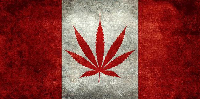 kanada cannabis