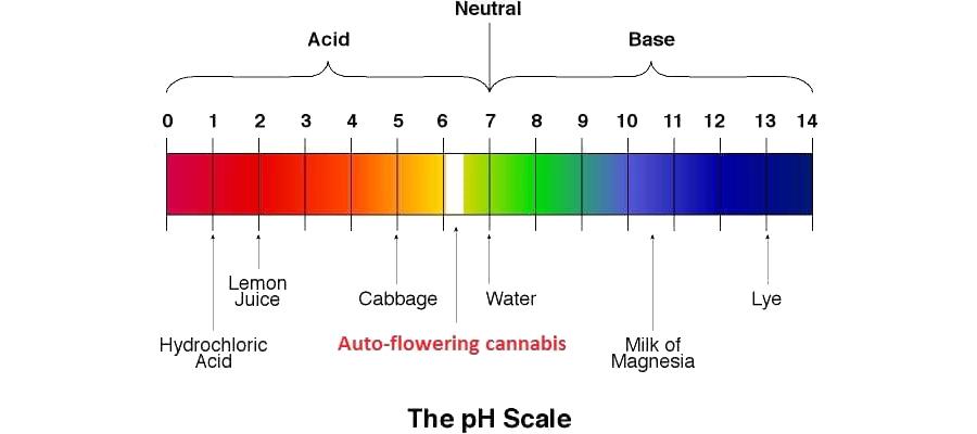 Der ideale pH-Wert für eine Cannabis Pflanze