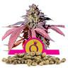 Purple Queen-Samen en gros