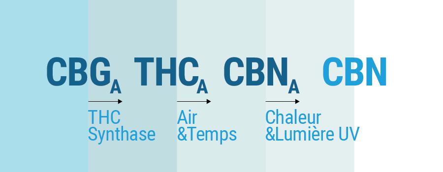 CBG, THC, CBN to CBN