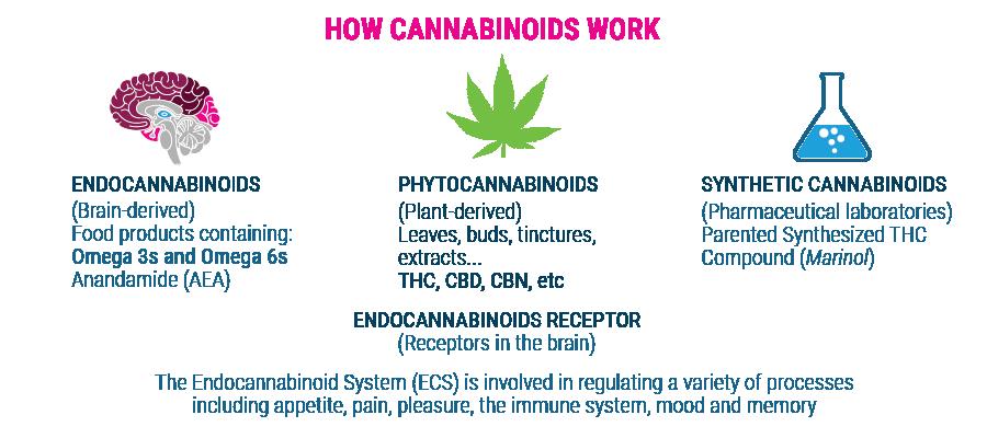 Wie Cannabinoide arbeiten