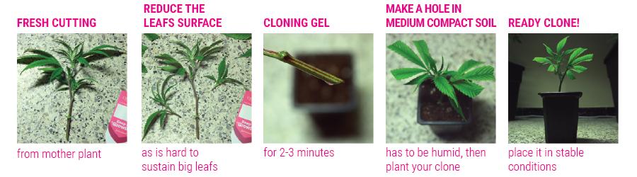 klone tutorial