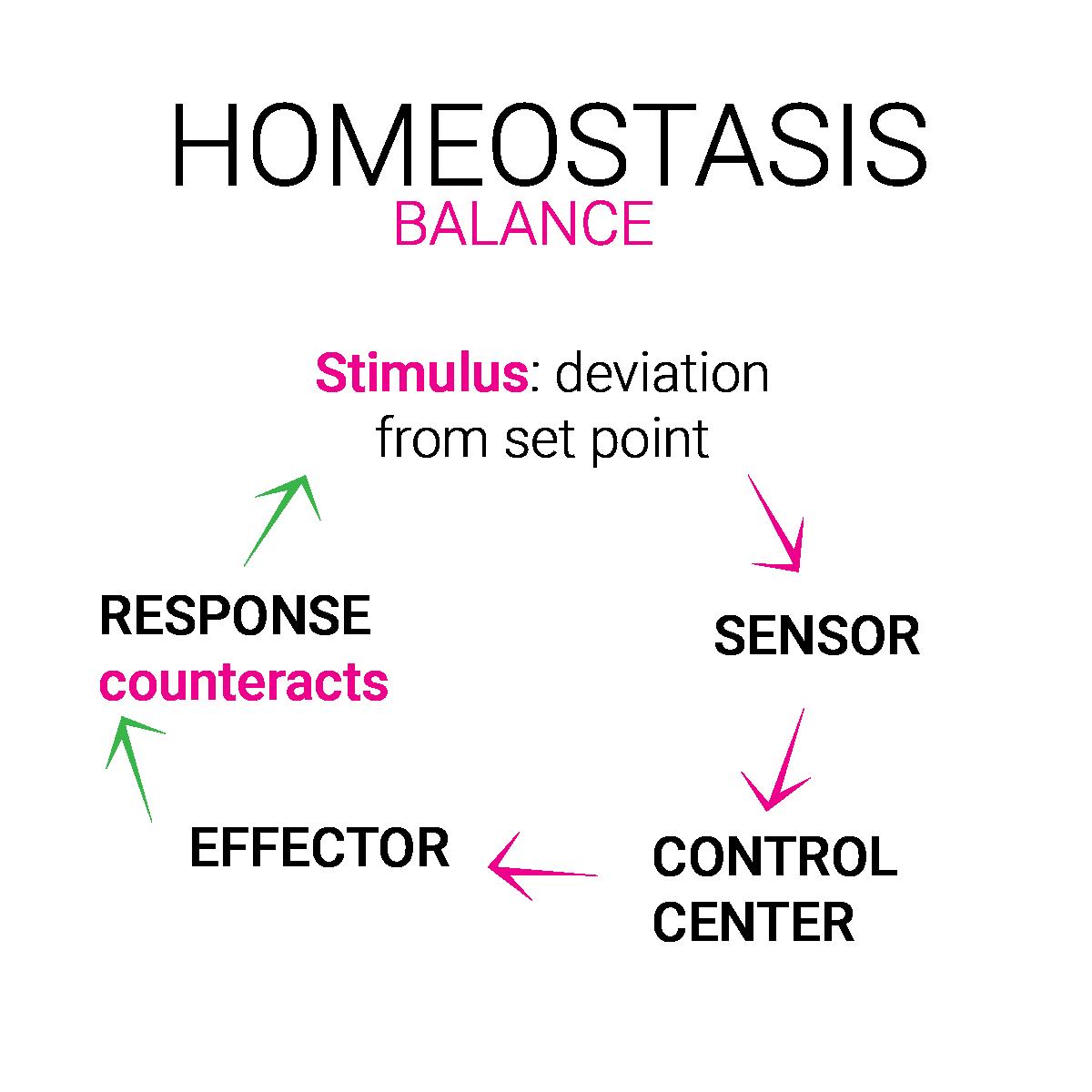 Homöostase Gleichgewicht