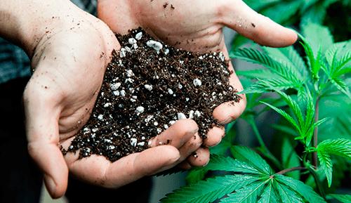 Boden cannabis
