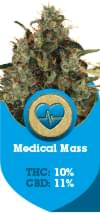 Medical Mass a CBD Rich cannabis strain fro medical use
