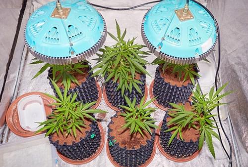Marijuana Mit LEDs
