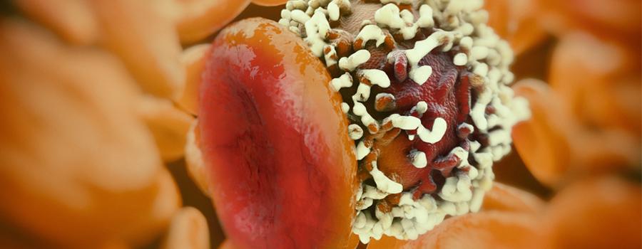 Zellen teilen Krebs Cannabis Gegenwirkung
