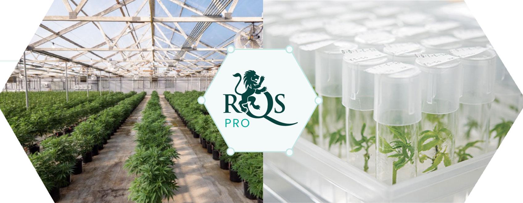 RQS Pro: Führende Innovation & Entwicklung im Cannabissektor