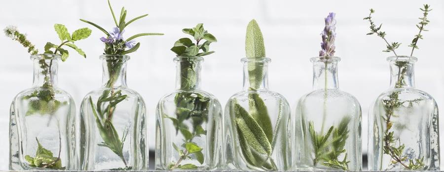 Ätherische Öle Cannabis Bugs Blattläuse