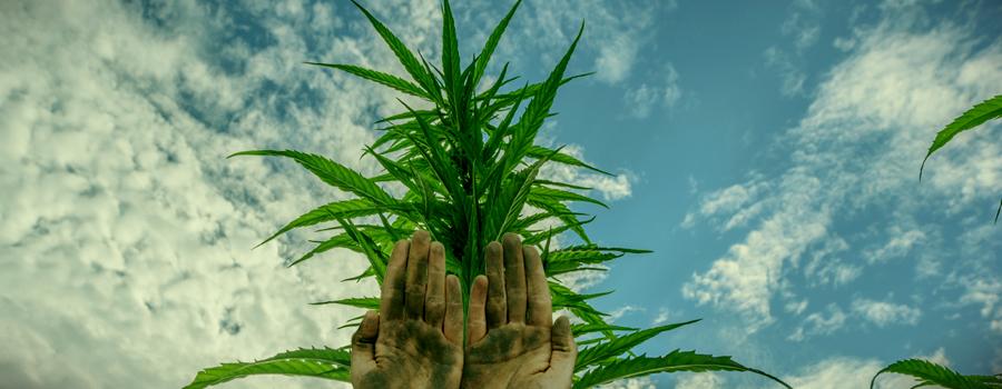 Charas Hände rollen Cannabis Bud