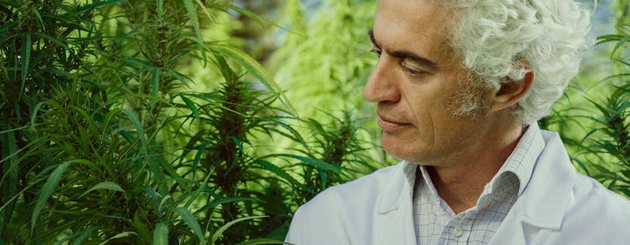 Vater kümmert sich um Cannabis