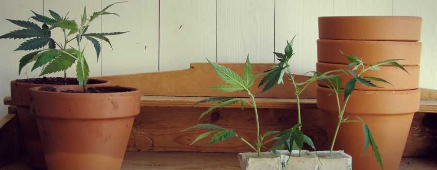 Uruguay parlament legalisierung cannabis