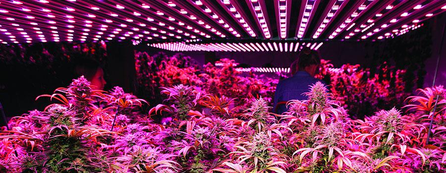 die verschiedenen arten von lampen f r cannabis vor und nachteile rqs blog. Black Bedroom Furniture Sets. Home Design Ideas