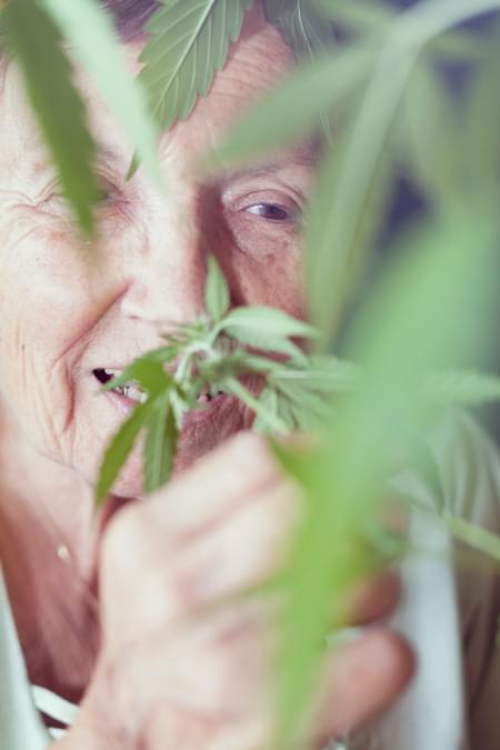 Parkinson Cannabis Royal Queen Medizinische Belastung Chronische Schmerzen Alzheimer Arthritis Depression