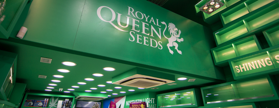 Royal Queen Seeds Geschäft Barcelona Pelai