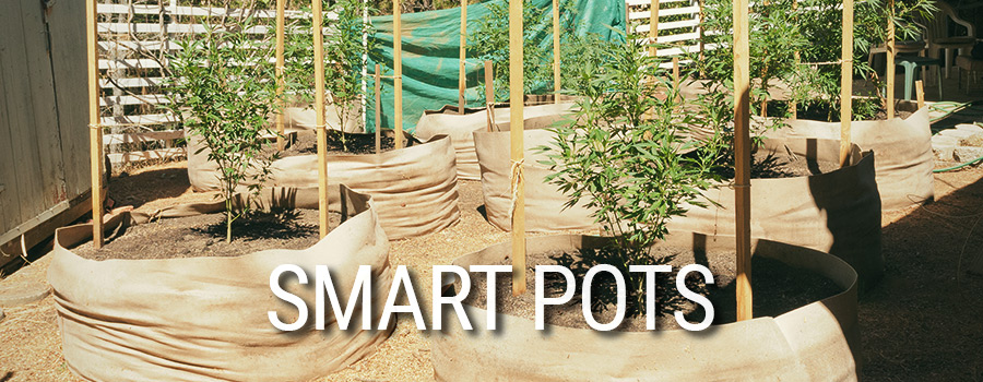 Smart Pots Cannabis Anbau