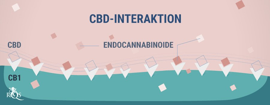 CBD Interaktion