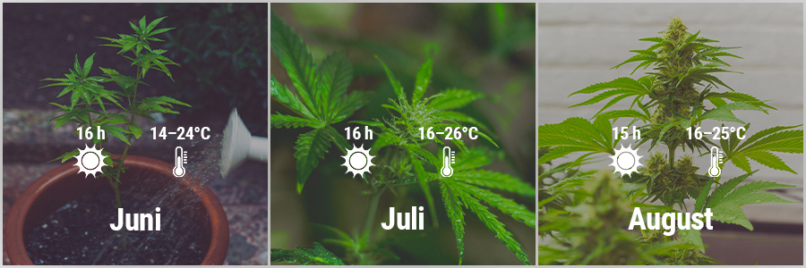 How To Grow Cannabis Outdoors In France March, April, May