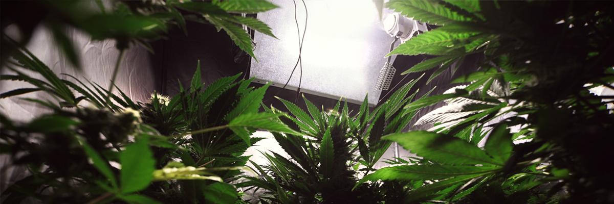 LIGHTS VERSTECKTE Birnenkultivierung geführte Inneninstallationssystem