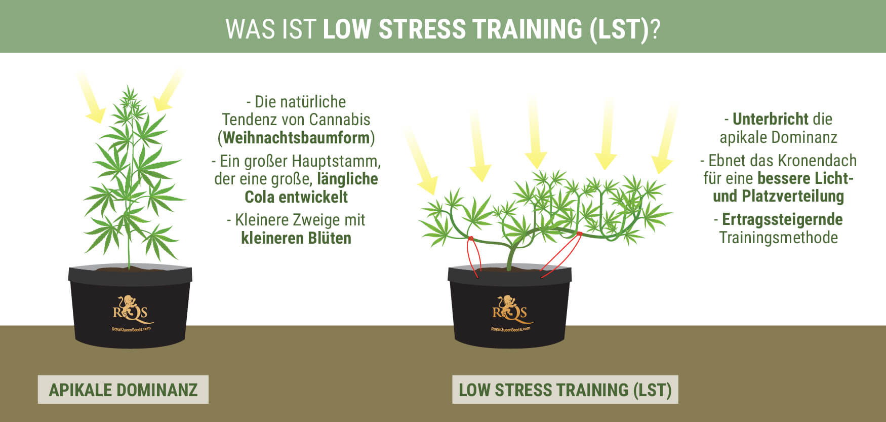 Was Is Low Stress Training?