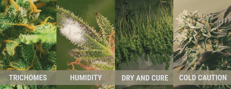 Autumn Cannabis Material