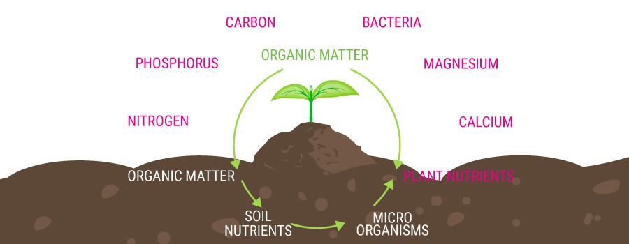 Organische Futterkette
