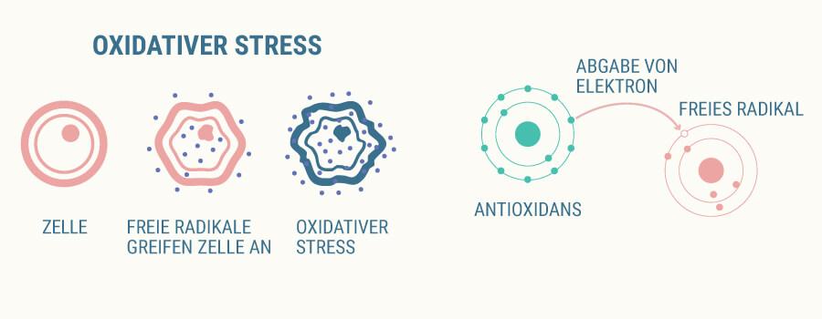 Oxidativen Stress