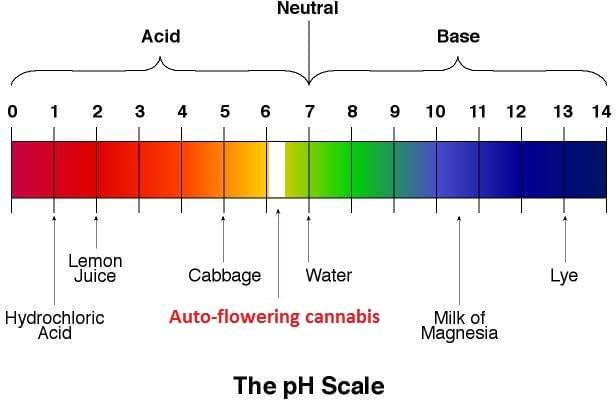 der ideale ph wert f r eine cannabis pflanze royal queen seeds. Black Bedroom Furniture Sets. Home Design Ideas