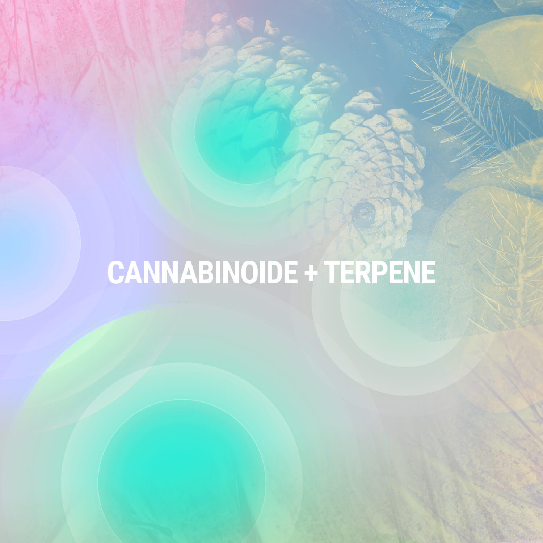 Cannabinoide + Terpene