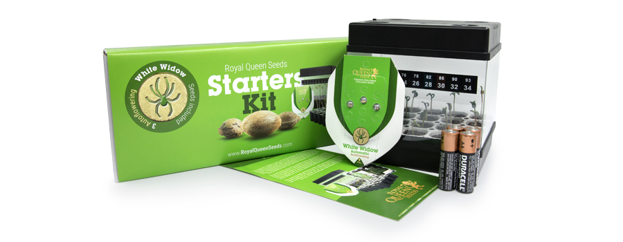 Cannabissamen-Starterset Royal Queen Seeds