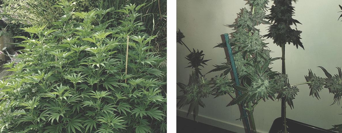 Pflanzen mit Schnur und Pfählen stützen