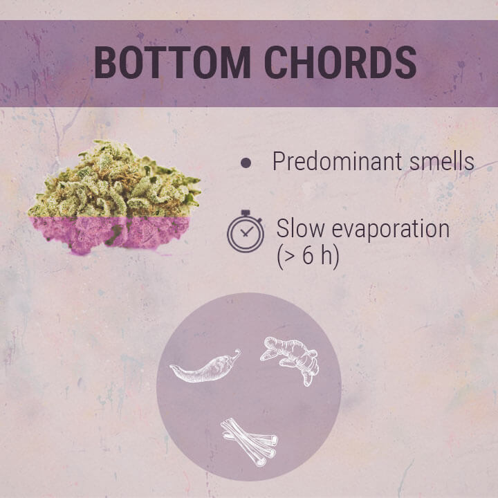 Bottom Chords Cannabis