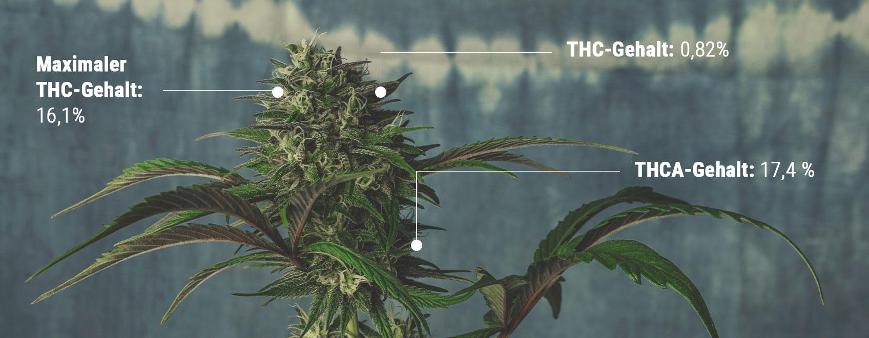 Die Wissenschaft der THC-Tests verstehen