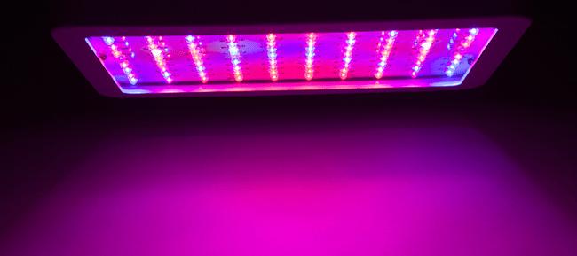 LED-Leuchten im Inneren wachsenden Cannabiskonsum sparen