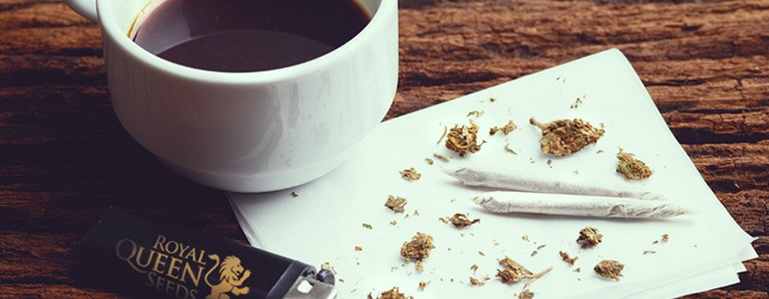 KAFFEE WEED CANNABIS ROYAL KÖNIGIN SAMEN