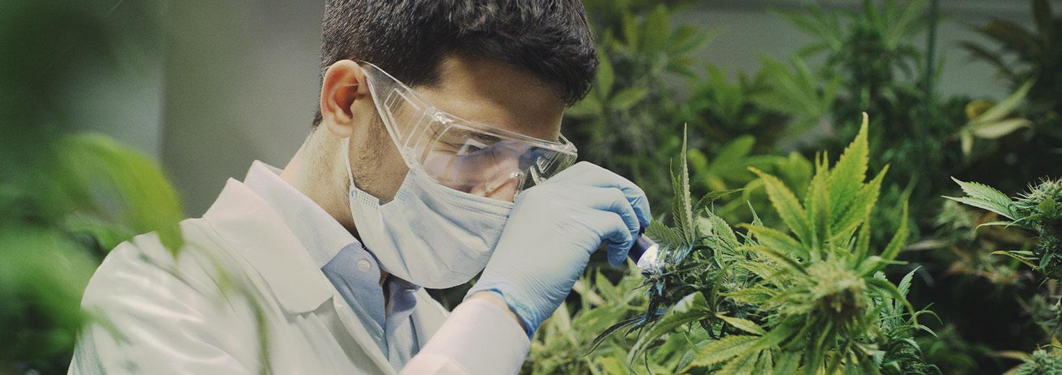 Cannabisforscher haben bisher nur an der Oberfläche gekratzt