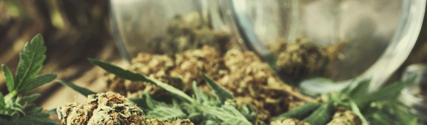 10 Mythen über Marihuana entlarvt