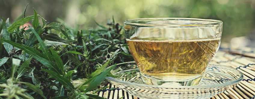 Making and Consuming CBD Tea: What You Need to Know