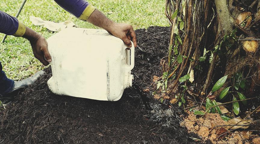 Als Komposttee auftragen