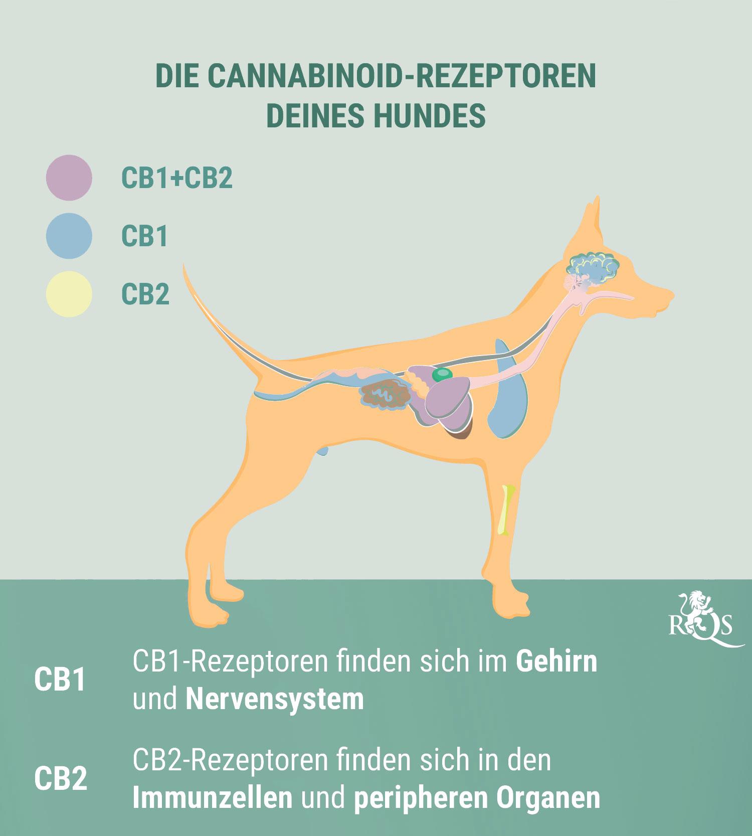 CBD für Hunde: Was wir bisher wissen
