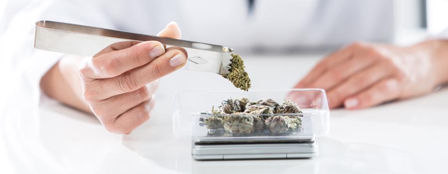 Allergische Cannabis-Dosis