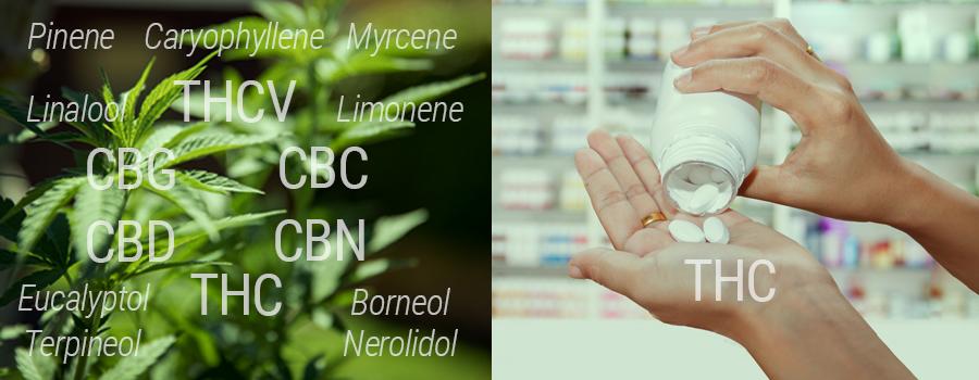 THC-Vergleich gegen synthetisches THC