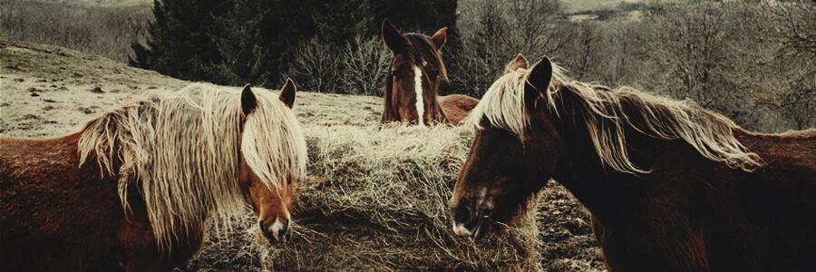 Pferd Bio-Kompost