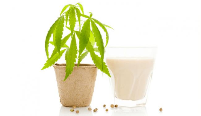 Cannabis Kokosöl Marihuana Milcheis Avocado Minze