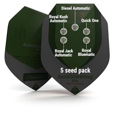 5 Seed RQS Autoflowering Mix