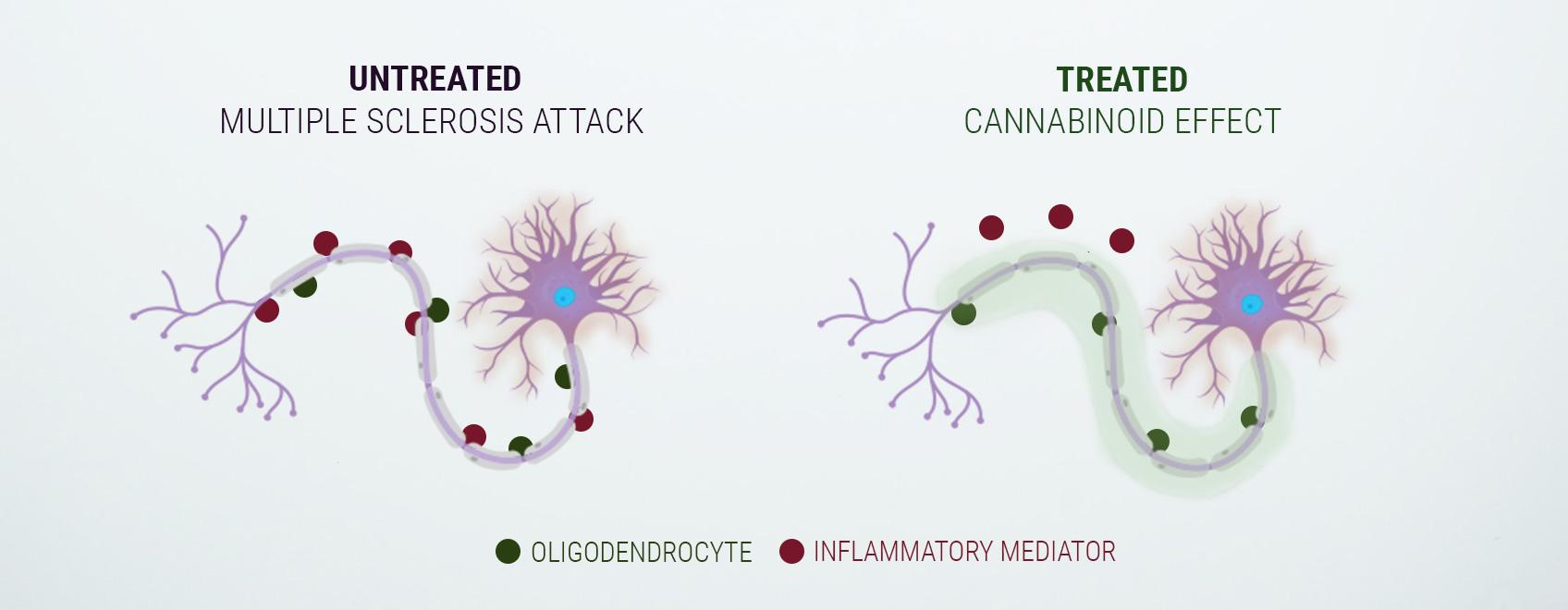 Ein Wort zum Endocannabinoid-System