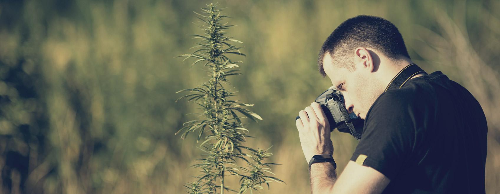 Können Sie uns Ihre Top-Tipps für kreative Cannabisbilder verraten?