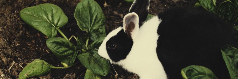 Bio-Kompost aus Kaninchen