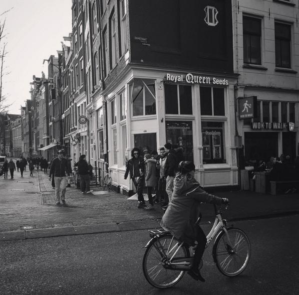 Hanfsamen Shop in Amsterdam
