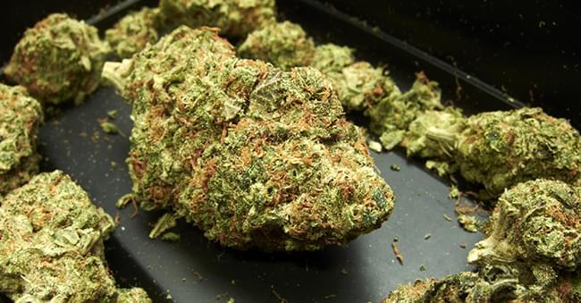 Harz Knospen Cannabis